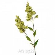 Paniculata 94 cm