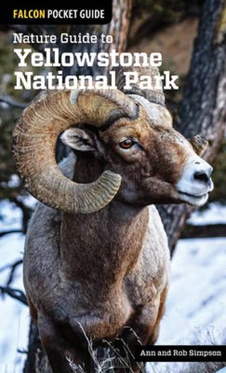yellowstone NP nature guide Falcon 2015