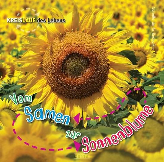 Vom Samen zur Sonnenblume