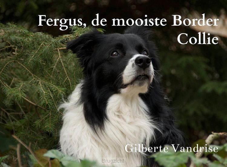 Fergus, de mooiste Border Collie