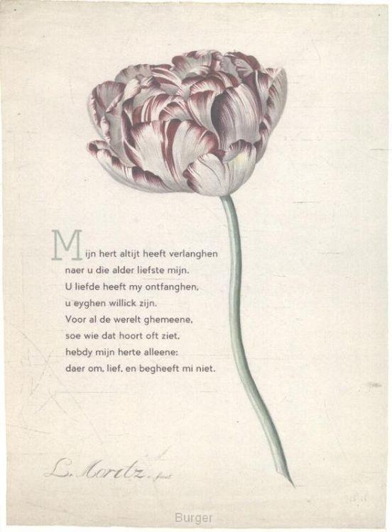 10 poëziekaarten plint met gedicht 'Mijn hert'