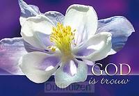 Wenskaart God is trouw (bloem)