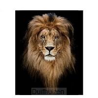 Lion of Judah 40x50cm