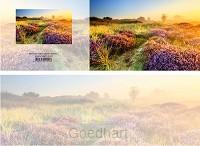 Panoramawenskaart bloeiende heide