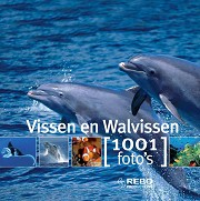 Vissen en walvissen