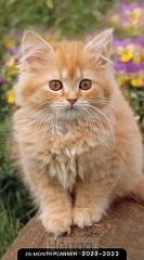 2022 28 Month planner Kittens