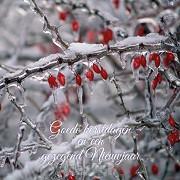 Kerstkaart goede kerstdagen tak met rijp