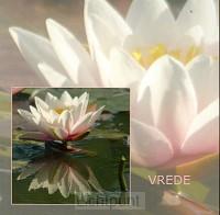 Wenskaart waterlelie wit