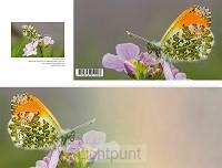 Panoramawenskaart zt oranjetipje