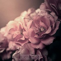 Kaart oudroze roos blanco