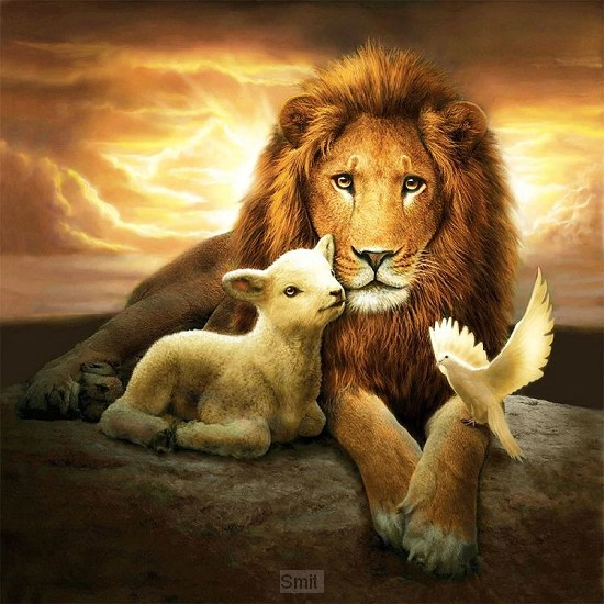 Lion & the lamb 40x40cm square drill