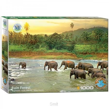 Rain forest 1000 st