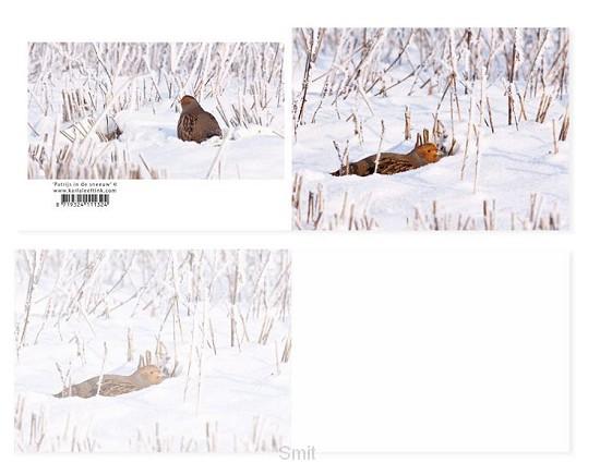 Panoramawenskaart zt Patrijs in sneeuw