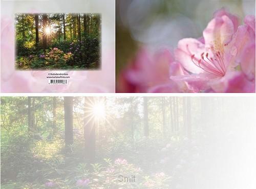 Panoramawenskaart zt rododendronbos