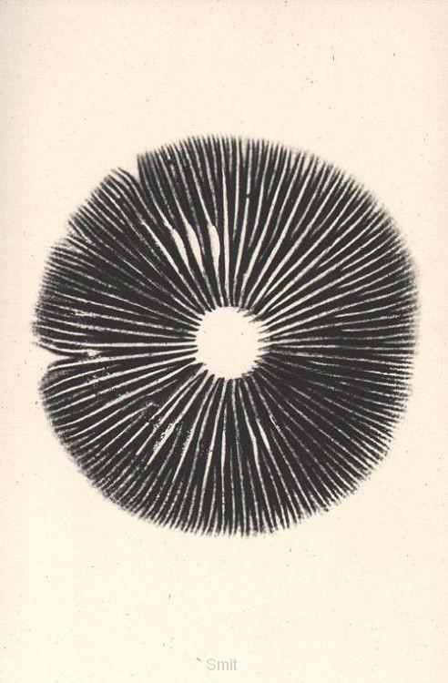 The mushroom project