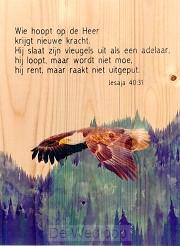 Adelaar Jesaja 40:31