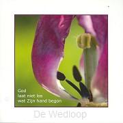 Wenskaart bloeiende tulp