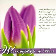 Prentbriefkaart wie hoopt op de Heer