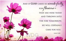 And if God cares so wonderfully - Flower