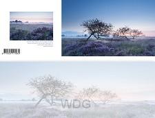 Panoramawenskaart zt bloeiende heide