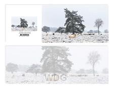 Panoramawenskaart Schapen in de sneeuw