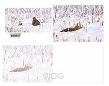 Panoramawenskaart Patrijs in de sneeuw