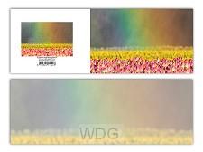 Panoramawenskaart zt tulpen in regenboog