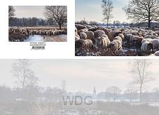 Panoramawenskaart de hei op - schapen