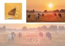 Panoramawenskaart koeiemorgen