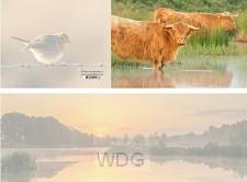 Panoramawenskaart schotse hooglanders