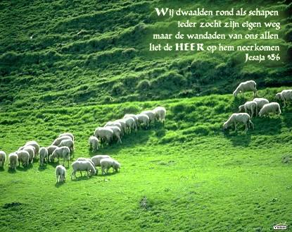 Allen als schapen