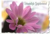 Prentbriefkaart gefeliciteerd [ 25 stuks ] : Picture light moments