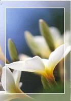 Prentbriefkaart blanco [ 25 stuks ] : Picture light moments