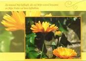 Prentbriefkaart blanco [ 25 stuks ] : Picture light 4 ever