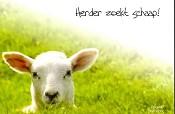 Prentbriefkaart herder zoekt schaap [ 12 stuks ] : Gospel oneliner